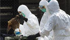 Čína ruší obchod s živou drůbeží. Oběti ptačí chřipky stoupají