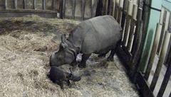 Vzácný přírůstek. V zoo Plzeň se narodilo mládě nosorožce indického