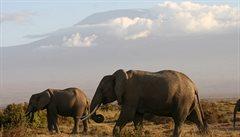 Sloní populace v Amboseli je v ohrožení