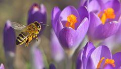 Nerozpoznáte květiny? Vědci vytvořili aplikaci pro určování druhů
