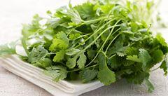 Koriandr a thajská bazalka. Zkuste si vypěstovat asijské bylinky