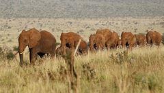 Mladí vesničané střeží na slonech indonéské lesy