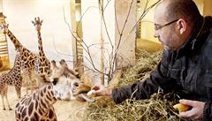 Ředitel Zoo Praha: Potíž je v tom, že maso nebylo ze žirafy, ale z Maria