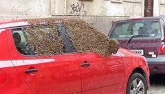 Roj včel si chtěl z auta udělat úl, zlikvidovali ho hasiči