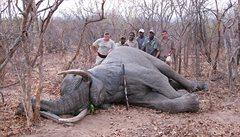 Zastřelil jsem slona. No a co?