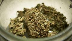 Legální marihuana? Policie v Coloradu se bouří
