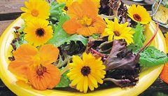 Rozkvetlý talíř. Zkuste si připravit jedlé květiny, radí Roman Paulus