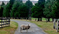 Se zvednutým prstem na Novém Zélandu: co stop to nový příběh