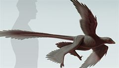 Vědci v Číně objevili 'čtyřkřídlého' létajícího dinosaura