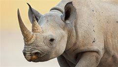V Keni uhynul nosorožec, který byl do Afriky převezen z České republiky