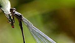 Číňané objevili největšího zástupce vodního hmyzu