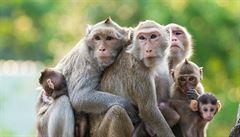 Průlom ve výzkumu léčby eboly. Vědci úspěšně vyléčili skupinu opic