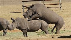 Po stopách UNESCO: Pokus o setkání s králem a sex nosorožců