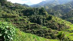 Přes 3 miliony sazenic v hodině. Filipíny trhly rekord v sázení stromů