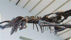 Vědci zkoumali předchůdce krokodýlů. Měřil devět metrů