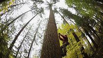 Vlastníci lesů dostali zákaz těžit dřevo. Musí zpracovat nejdřív ... 695dd973e03