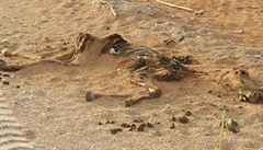 Po stopách UNESCO: Mrtvá zvířata a úplatní policisté v Maroku