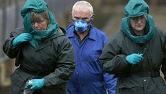 Británie kvůli ptačí chřipce vybije 6000 kachen, Nizozemsko 150 000 kuřat