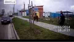 Brněnský western. Strážníci naháněli bizona, nakonec ho skolili taserem