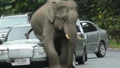 Slon se v thajském národním parku uvelebil na projíždějících autech
