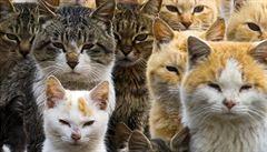 Japonský ostrov Aošima ovládly kočky. Bydlí i v opuštěných domech