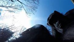 Šimpanzice v zoo zneškodnila větví dron s kamerou za dva tisíce eur