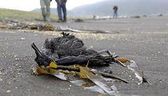 Přes tisíc mrtvých ptáků. Chilské úřady šetří záhadný úhyn