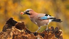 Ptáci vážně mohou škodit zdraví. Jsou nosiči rezistentních bakterií