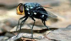 Zeptali jsme se vědců: Kolik hodin denně spí moucha?