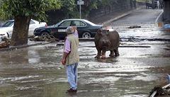 Zabíjela povodeň, ne zvířata, líčí ošetřovatel pražské zoo z místa tbiliské katastrofy