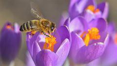 Brněnský hotel začal chovat na střeše v úlech vlastní včely