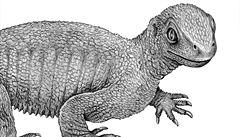 Vědci našli nejstarší želvu, žila před 240 miliony lety