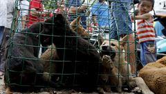 Ochránci práv zvířat slaví. Jižní Korea postavila mimo zákon zabíjení psů pro maso