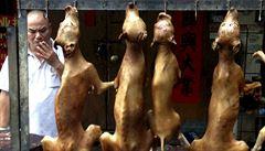 Festival psího masa v Číně začal i přes odpor milionů lidí