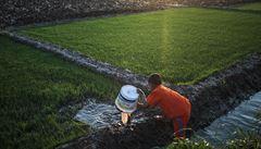 Životodárná pole kolem Nilu mizí. Egypťané staví domy
