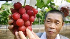 Hrozen vína se v Japonsku vydražil za rekordní dvě stě tisíc korun
