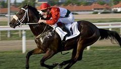 Zemřel zázračný hřebec Overdose, jeden z nejlepších dostihových koní světa