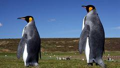 Největší kolonie tučňáků patagonských se zmenšila o 90 procent. Vědci nevědí proč