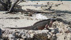 Na Galapágách mají ekologické letiště. Stojí na pozůstatcích vojenské základny
