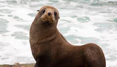 Německý ostrov v Severním moři přitahuje turisty. Jezdí sem kvůli tulením mláďatům