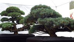 V Opavě vznikne obří japonská zahrada