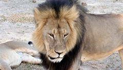 Petice žádá vydání vraha lva Cecila do Zimbabwe. Případ už šetří i USA