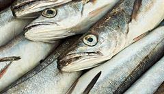 Rybí maso může podle vědců zmírnit účinky jedovatého kadmia