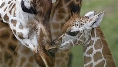 Zeptali jsme se vědců: Proč menší zvířata rodí více mláďat než velká?