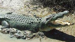 Blíž k městům a lidem. Australany děsí slanovodní krokodýli