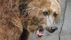 Po Břeclavsku se potuluje medvěd, lesníci nabádají k opatrnosti