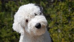Berlínské muzeum pořádá prohlídky výstavy pro psy