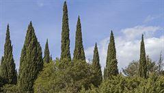 Některé stromy nehoří. Vědci konečně zjistili proč