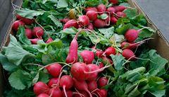 'Křivá' zelenina a ovoce do obchodů patří, lidé ji zachraňují z kompostu