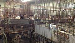 Poptávka dělá ze zubožených psů zboží. Množírenská mafie se neštítí ničeho
